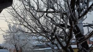 iarna 2016